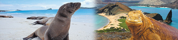 GALAPAGOS ISLANDS - UNFORGEATABLE NATURAL EXPERIENCES