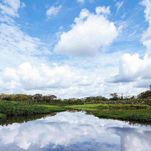 600_0006_Floodplain_Forest_The_Most_Biodiverse_Place_On_Earth_Experiences_Anakonda_Amazon_Cruises